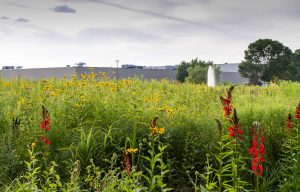 AriensCo Receives Wildlife Habitat Council Certification, So Enjoy These Beautiful Nature Pics Near Its Headquarters